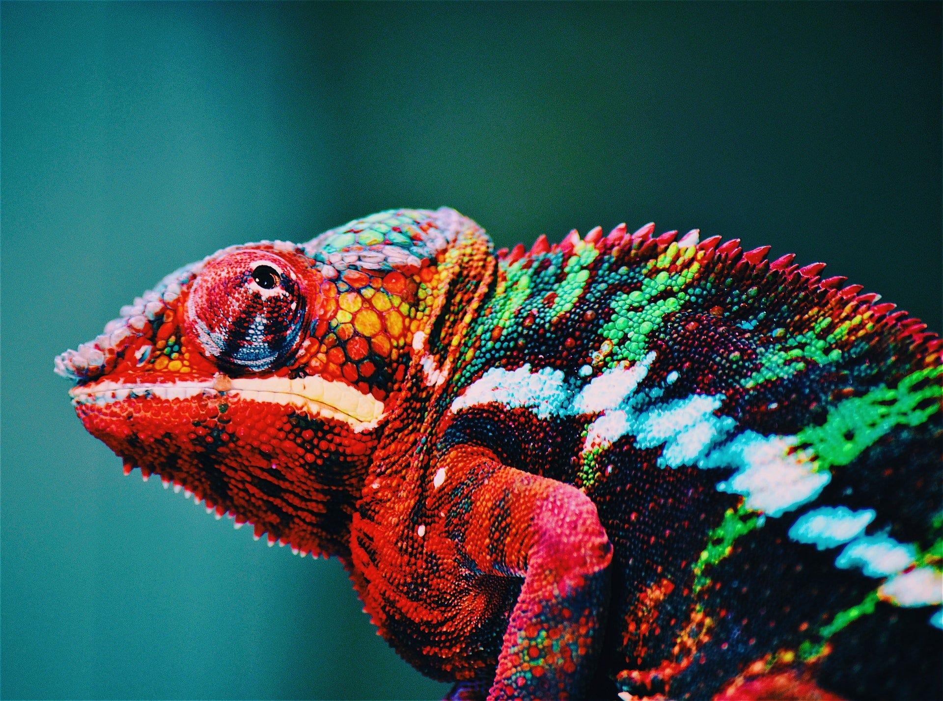 Pantone chameleon