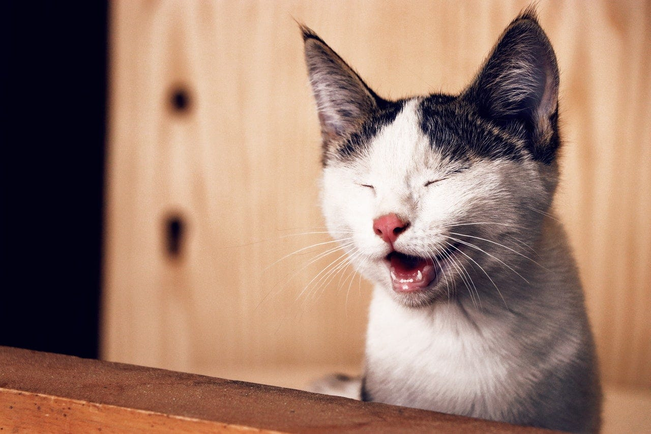 TVC Veterinary Discounts - Cat Products